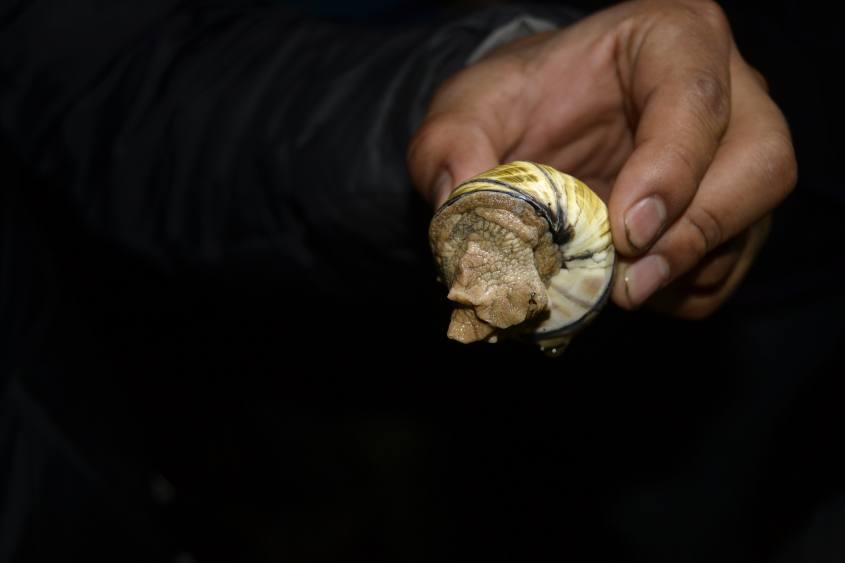 Lumaca di terra trovata durante la visita notturna nella Foresta Amazzonica del Perù