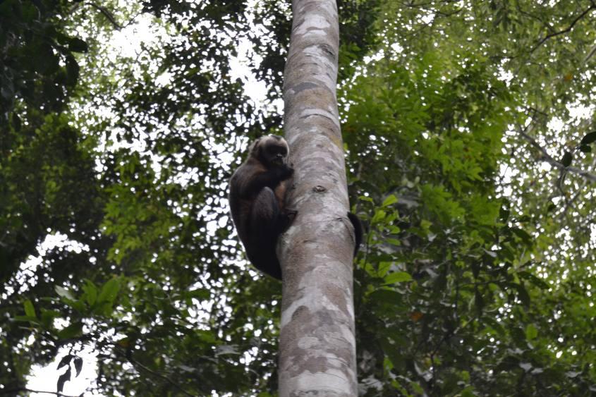 Avvistamento scimmia all'interno della Riserva Tambopata in Perù
