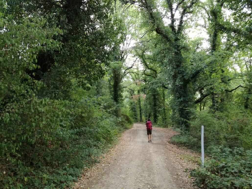 Via Francigena nei boschi toscani