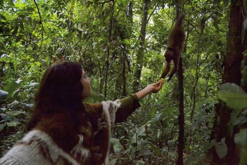 Sfamando una scimmia nell'Isola delle Scimmie all'interno della Riserva Tambopata in Perù