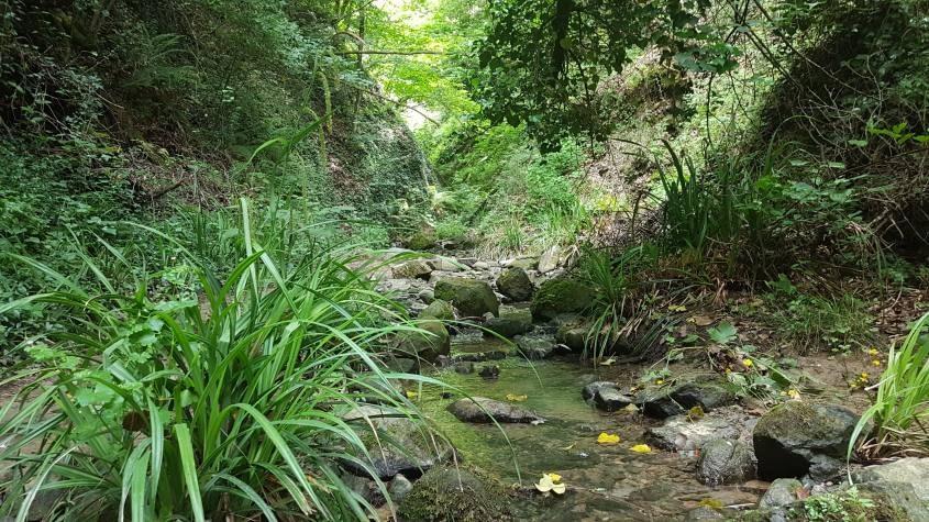 Parte di bosco nel percorso dell'acqua zolfina delle Balze del Valdarno