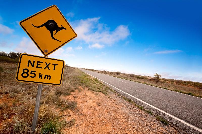 Cartello pericolo canguri On the Road Australia