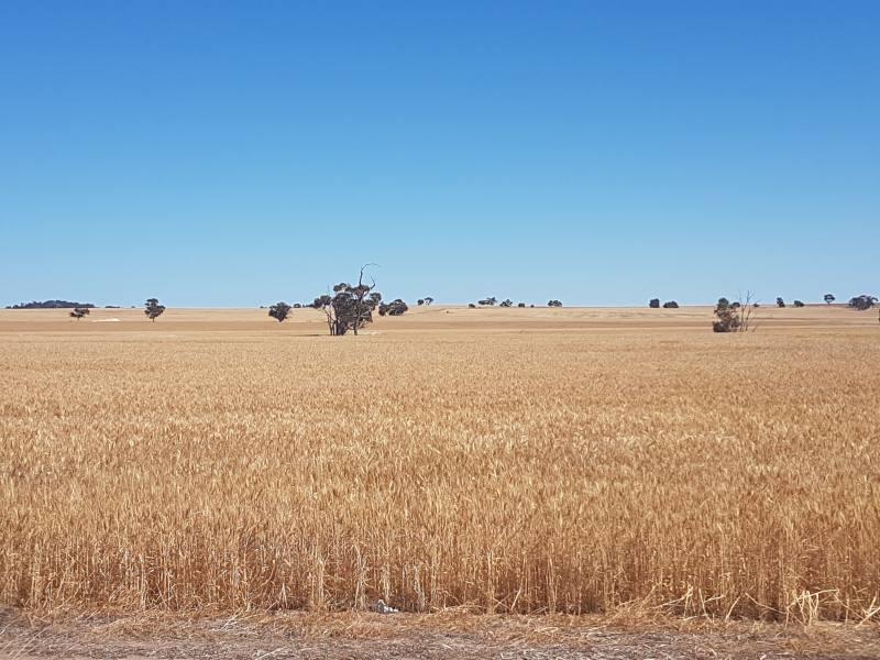 Campagna australiana nella strada tra Perth e Wave Rock