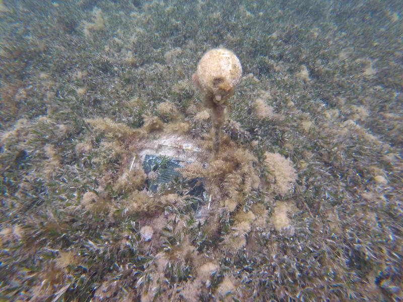 Pannelli informativi sul fondale di Parker Point raggiungibili facendo snorkeling