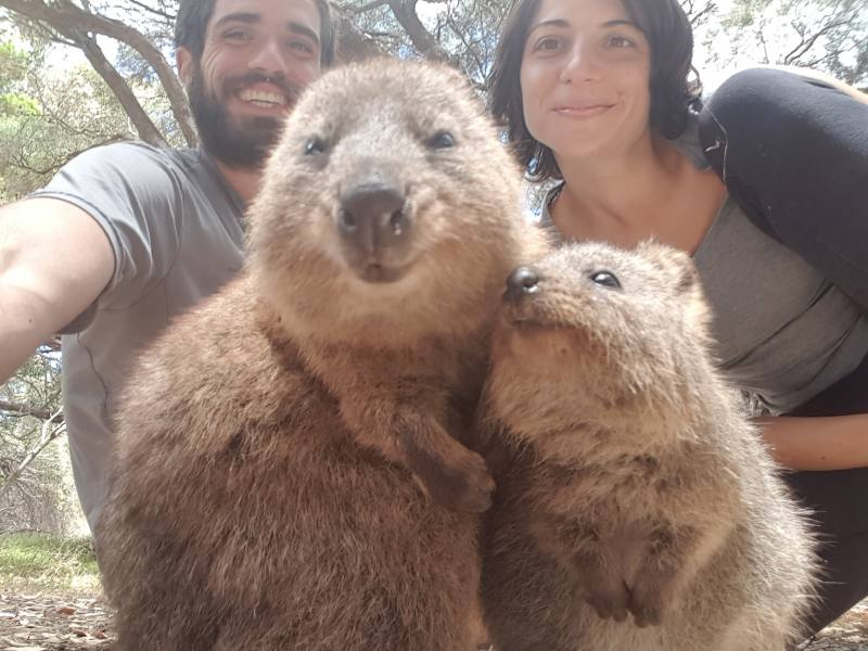 Selfie di gruppo con i quokka che ridono a Rottnest Island