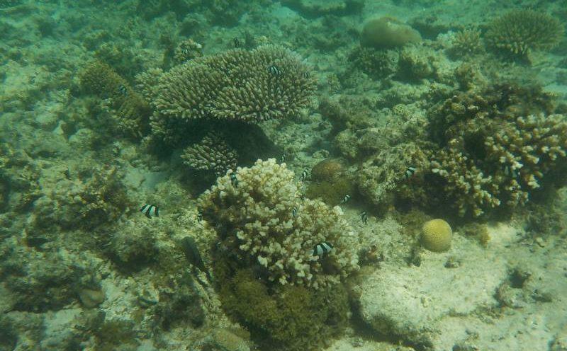 Fondale barriera corallina dalla spiaggia Paradise Point a Coral Bay in Western Australia