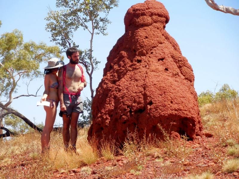 Termitai giganti alti come persone all'interno del Parco di Karijini