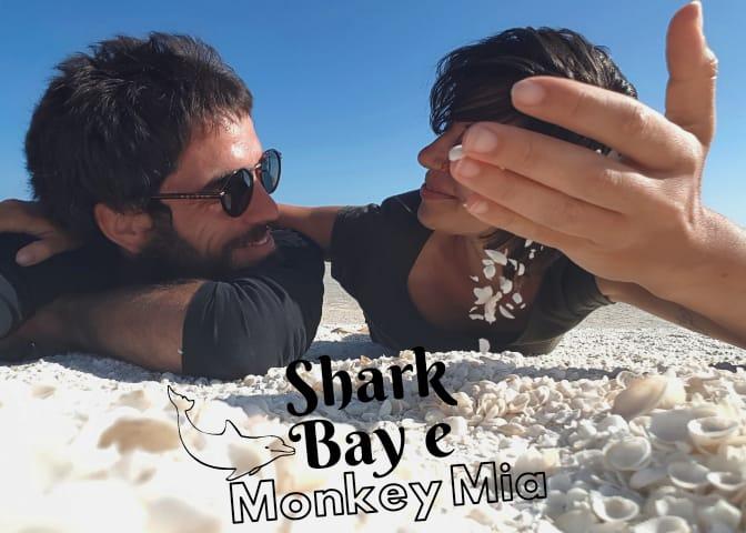 SHARK BAY, le spiagge, i parchi ed i delfini di Monkey Mia