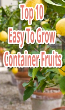 Top 10 Easy To Grow Container Fruits