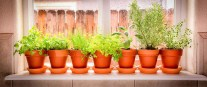 Herbs To Grow Inside Year-Round