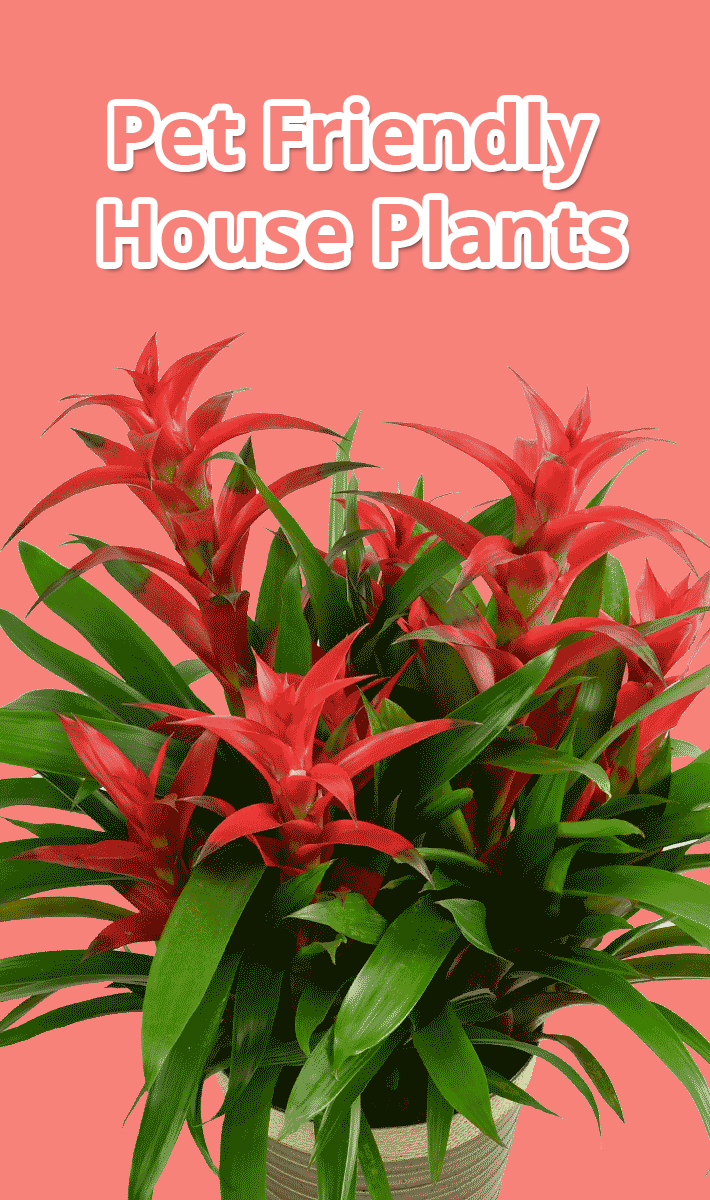 Tips About Life:Pet Friendly House Plants - Tips About Life