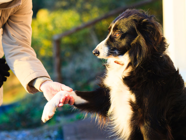 Food And Supplements Tips For Dogs With Arthritis