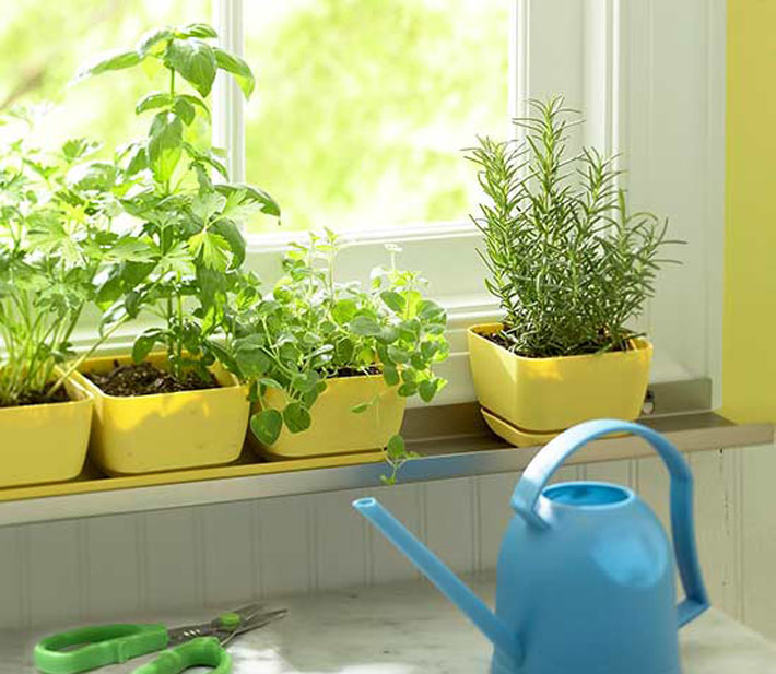 Tips For Kitchen Herb And Vegetable Gardens