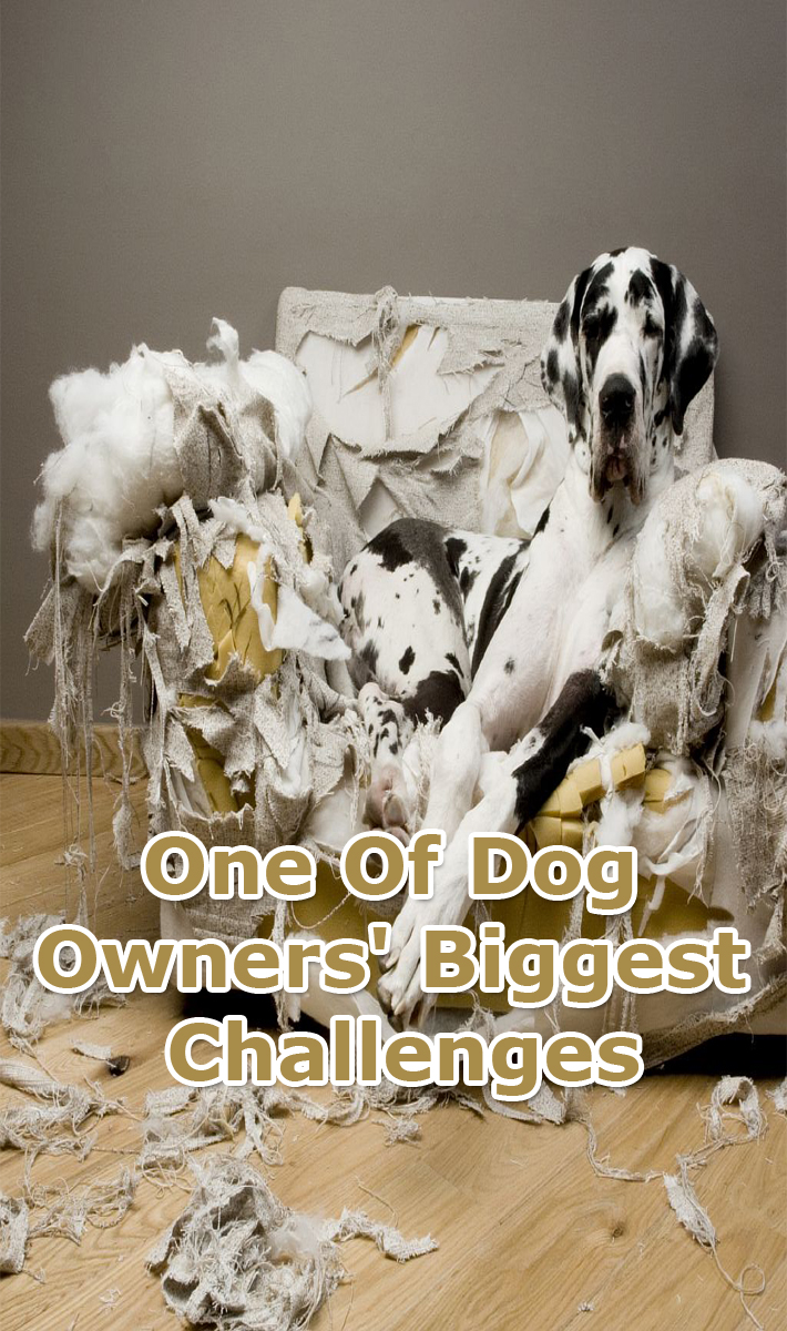 One Of Dog Owners' Biggest Challenges