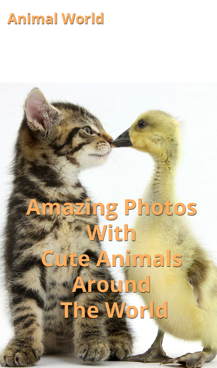 Amazing Photos With Cute Animals Around The World
