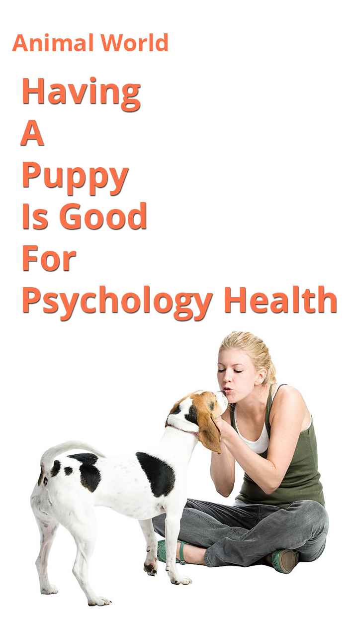 Having A Puppy Is Good For Psychology Health