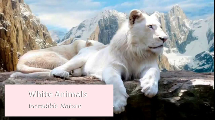 White Animals – Incredible Nature