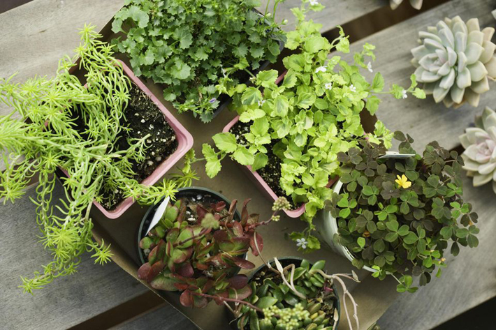 Container Gardens - Tips