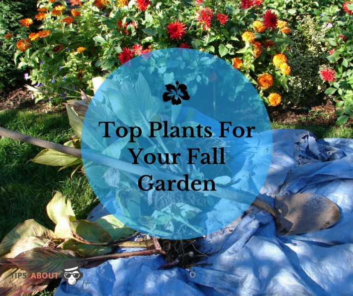 tips about lifetop plants for your fall garden tips about life - Fall Garden Plants