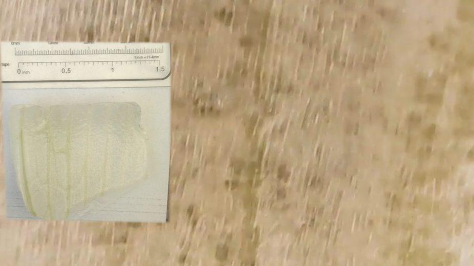 cebolla vista en microscopio usb