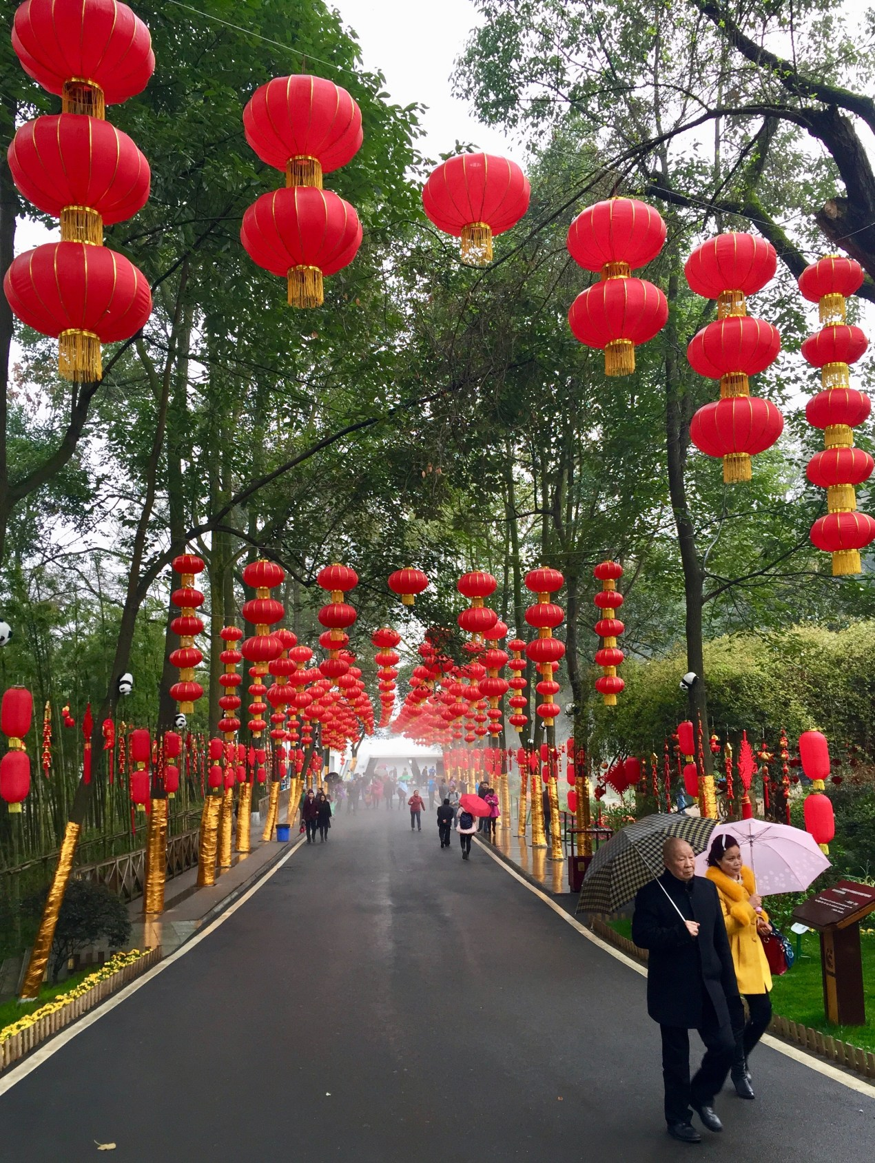 Red Lanterns In Sichuan Province