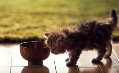 Best Low Carb Dry Cat Food in 2019