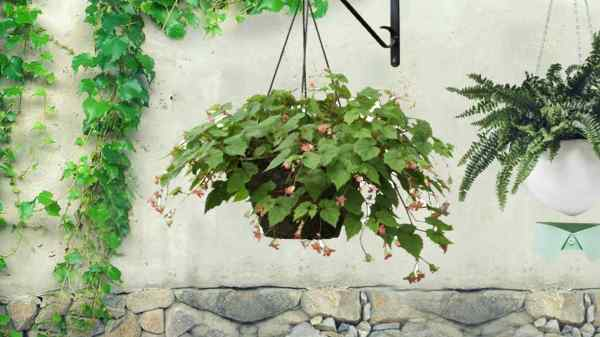 verticle wall planter