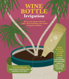 wine-bottle-irrigation