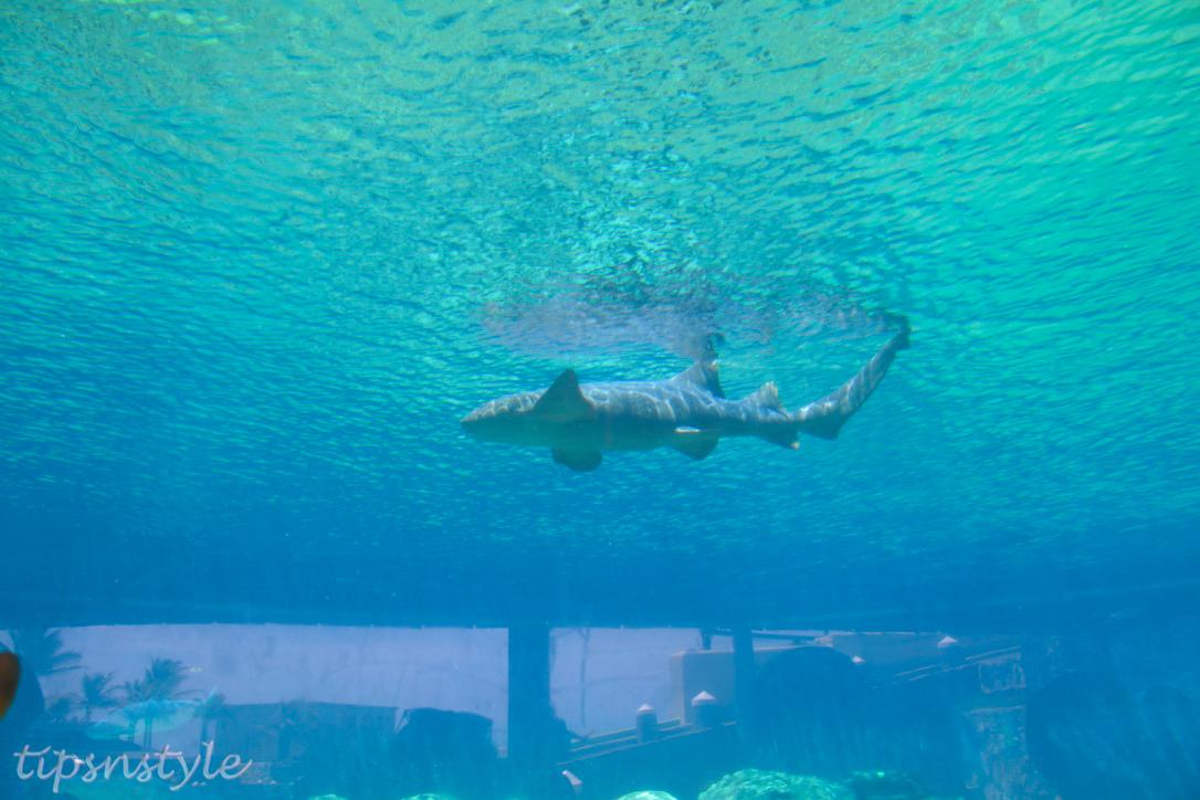 shark show