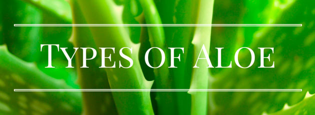 Image result for aloe aristata benefits