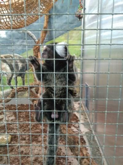 Zoo Zajac gratis alternatief voor dierentuin 1