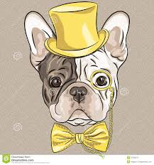 bull dog with yellow hat