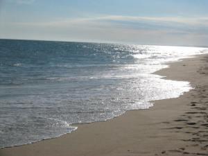 essay l2 ajam beach