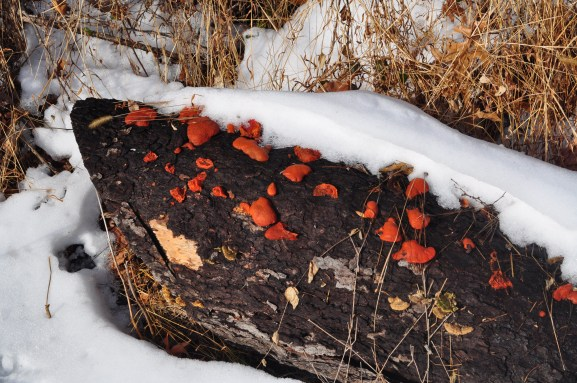 Bear Mountain - Fungi Colours