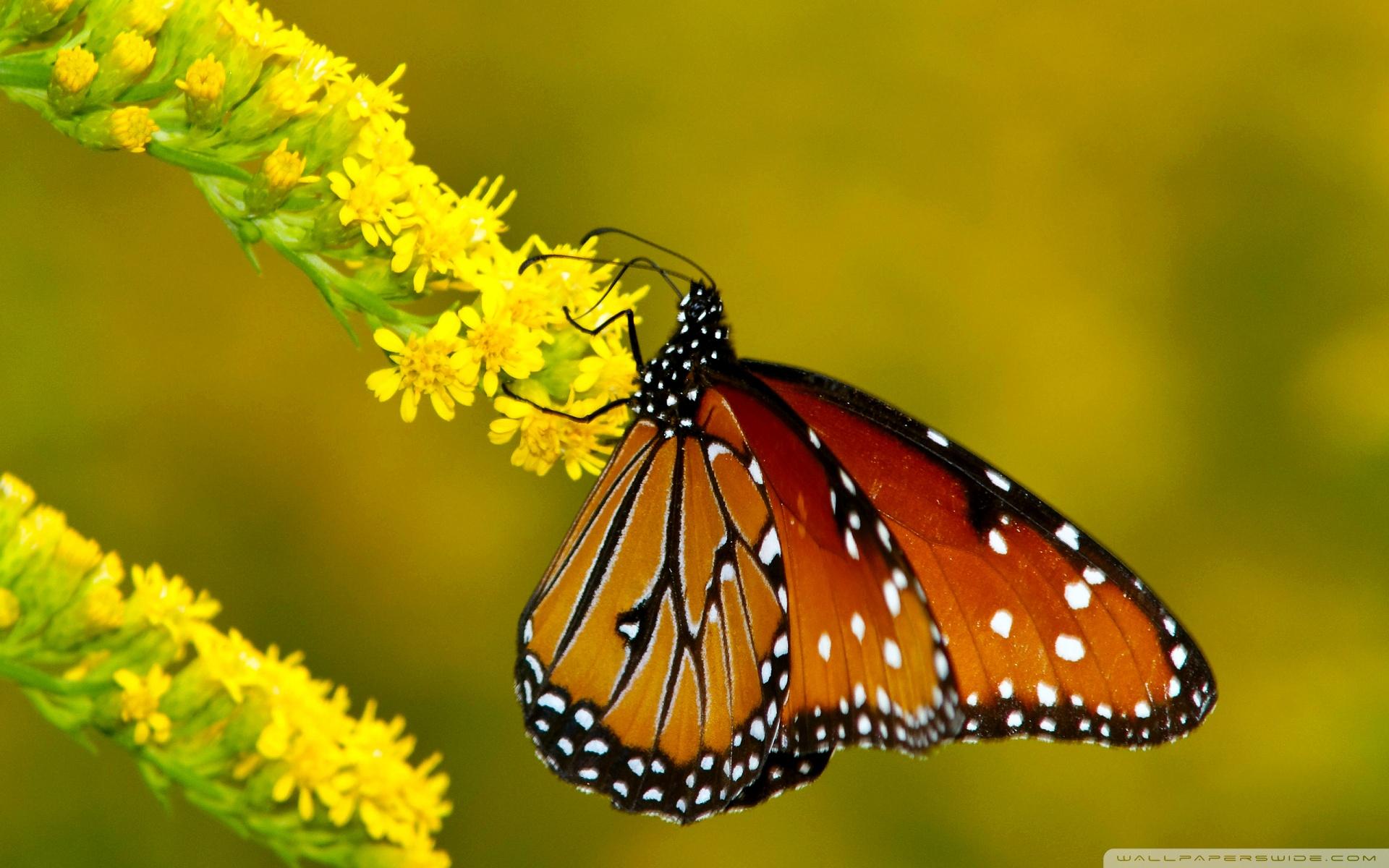 Mariposa Monarca – Tiptours.mx