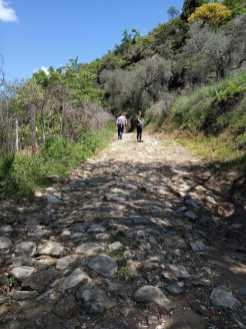 Vineyard way (Peze Helmes-Shesh-Ndroq) (8)