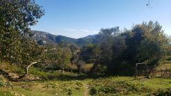 Arbane-Budine-Zhullime-Paper trail (1)