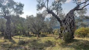 Arbanë-Petrelë-Krrabë-Shijon trail (10)