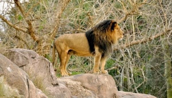 kilimanjaro_safaris