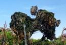 Pandora e as novidades no Disney's Animal Kingdom