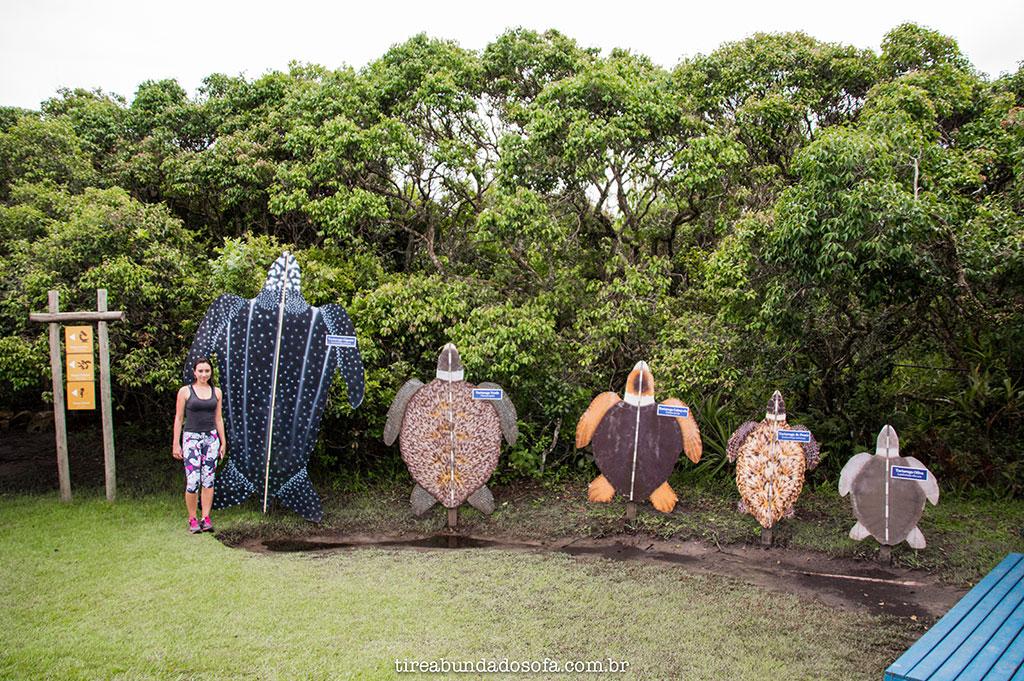 placas representam o tamanho que as tartarugas podem chegar, projeto tamar florianópolis