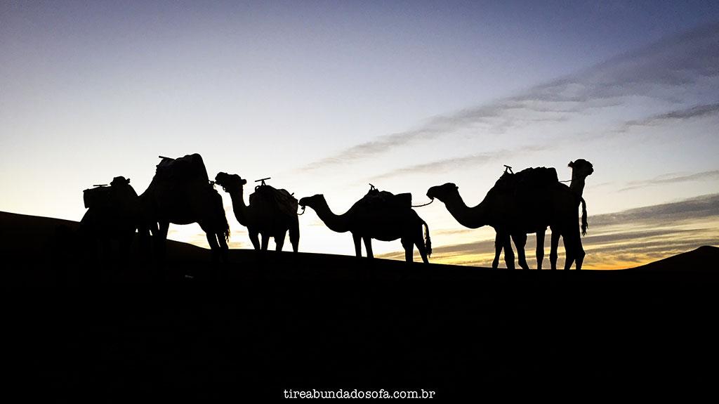 camelos-no-marrocos