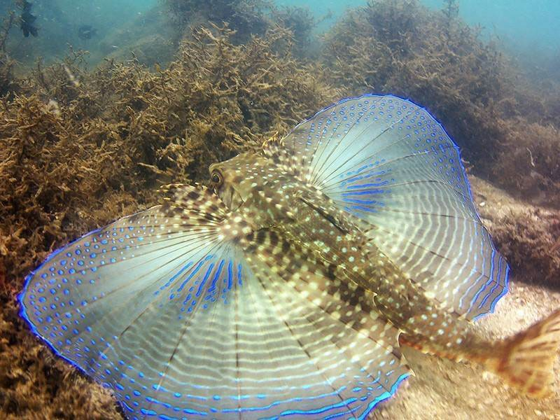 Foto de peixe exótico, durante mergulho em bombinhas, santa catarina
