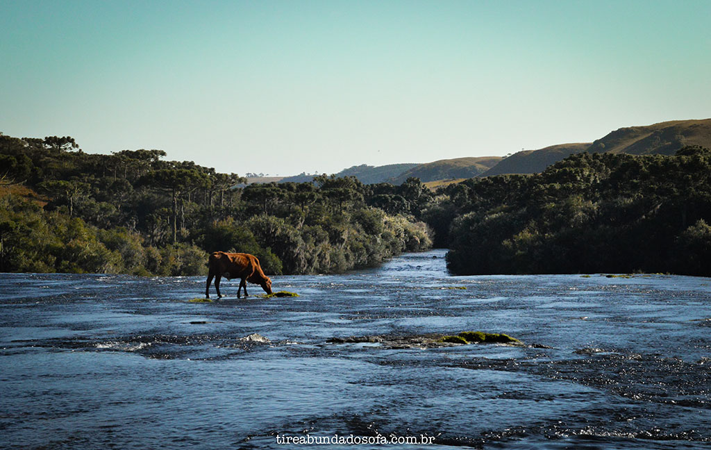 lajeado das margaridas cambará do sul, rio grande do sul, o que fazer em cambará do sul, terra dos cânions