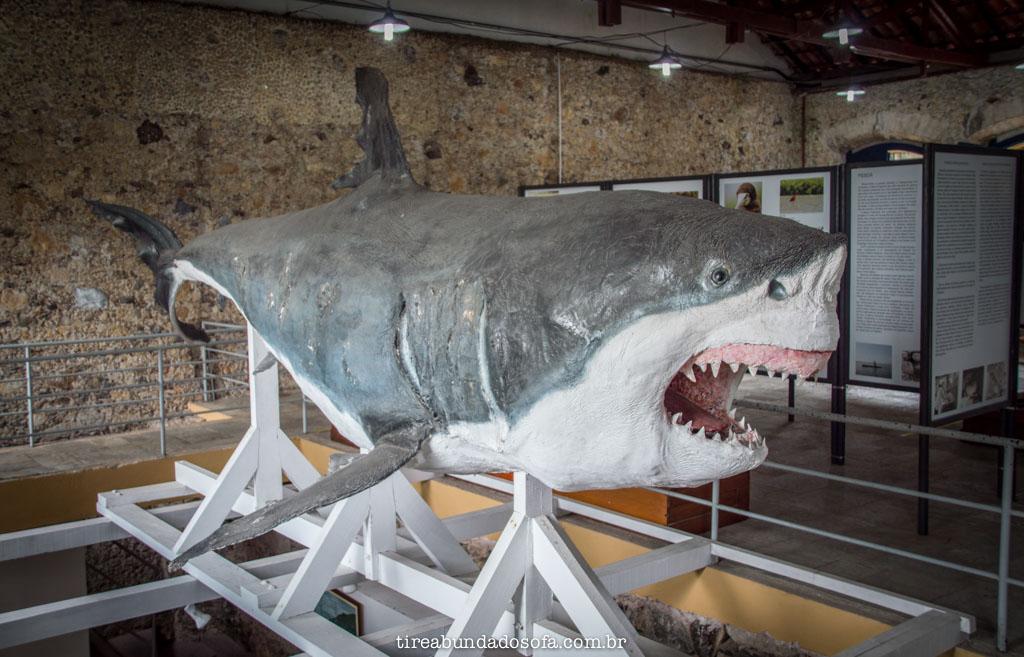 O maior tubarão branco em exposição no mundo, no museu municipal de cananéia