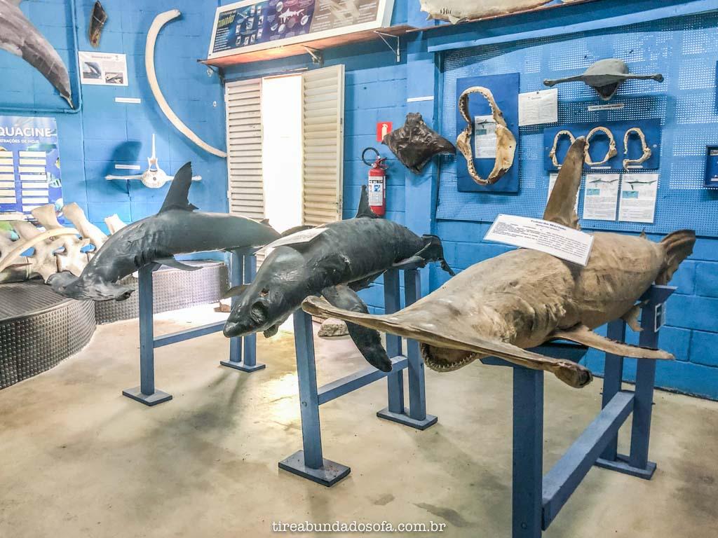 Mini museu do Aquário de Peruíbe, expondo tubarões