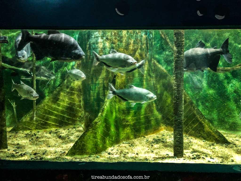 aquário de peruíbe, sp