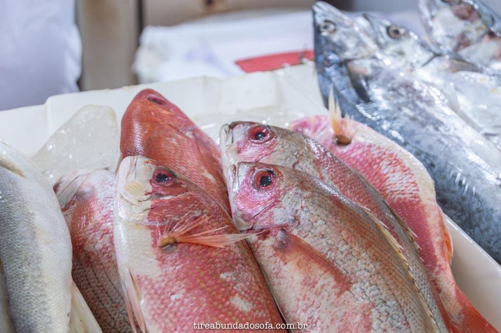 peixes frescos, para vender no mercado de peixes, em peruíbe, são paulo