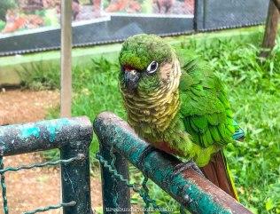 Pássaros lindos, no Zoo Pomerode, Santa Catarina