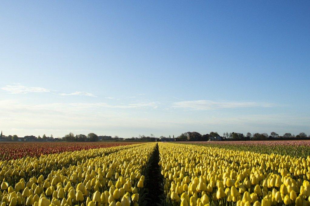 Cidade de Lisse, na Holanda